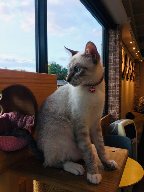 新竹竹北美食。貓角落Cat  Corner 。萌貓寫真地。【Miss 飛妮】 @Miss 飛妮