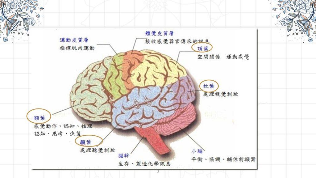 右腦思考。內田和成著。善用直覺、觀察、感受, 超越邏輯的高效工作法[Miss飛妮讀書筆記] @Miss 飛妮