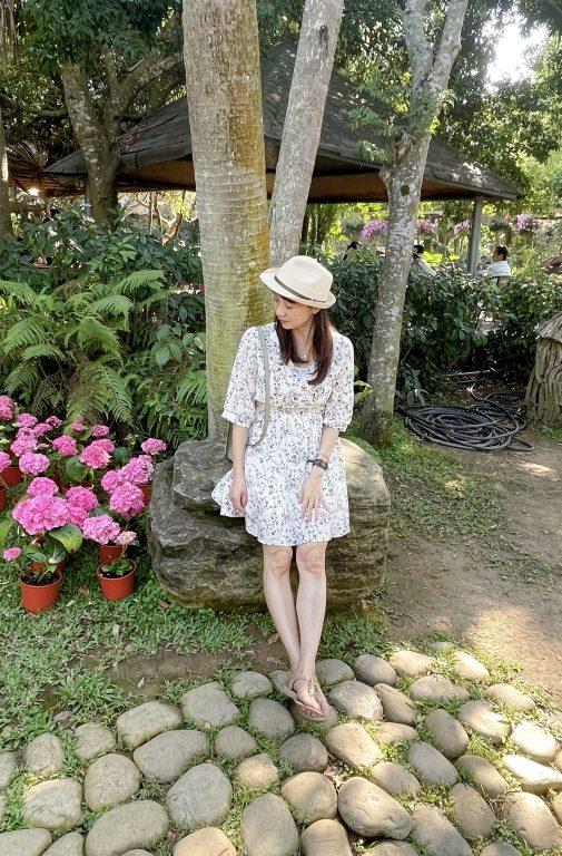 苗栗卓蘭景點。花露休閒農場。4~6月繡球花大爆發。與花共舞。繡球花季寫真[Miss飛妮] @Miss 飛妮